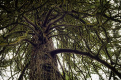 Savage Tree. This image was captured in a forest in South Dublin Stock Photography