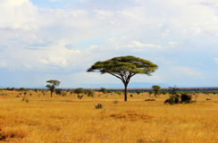 Savana africana Immagini Stock Libere da Diritti