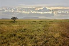 Savana africana al tramonto Albero solo Immagine Stock