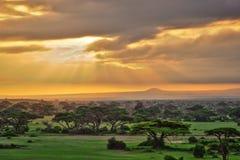 Savana africana nel parco nazionale di Amboseli Fotografia Stock Libera da Diritti