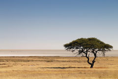 Savana africano Foto de Stock Royalty Free