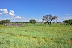 Savana africano do arbusto, Namíbia imagem de stock