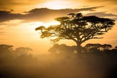 Savana africano no nascer do sol Foto de Stock