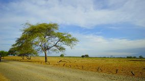Savana Bekol en parc national de Baluran image libre de droits