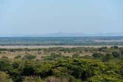 Savana del terreno boscoso Immagine Stock Libera da Diritti