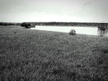 Savana des Wassers Stockbilder
