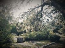Savana do cemitério Imagens de Stock