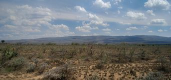 Savana em Kenya África imagens de stock