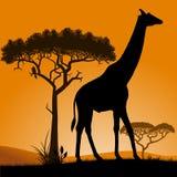 Savana - giraffa Fotografia Stock