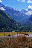 Savana before jiuzhaigou Royalty Free Stock Image