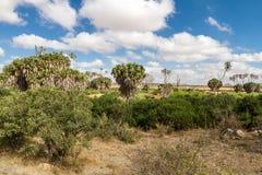 Savana krajobraz w Afryka. Zdjęcie Stock