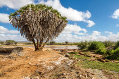 Savana landscape in Africa. Royalty Free Stock Photography