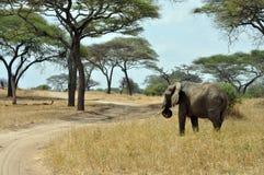 Savana landscape with elephant stock photo