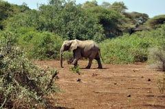 Savana landscape with elephant Royalty Free Stock Photos