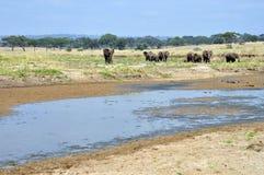 Savana Landschaft mit Elefanten und Fluss Lizenzfreies Stockfoto