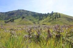 Savana landskap av ökenberget Arkivfoton