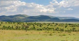 Savana in masai Mara National Reserve, Kenya immagini stock libere da diritti