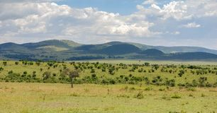 Savana no Masai Mara National Reserve, Kenya imagens de stock royalty free