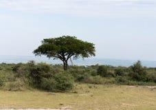 Savana no parque nacional Safari Reserve de Murchison Falls em Uganda - pérola de África imagens de stock