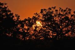 Savana sudafricana di tramonto nella riserva di caccia privata di Kapama immagine stock libera da diritti