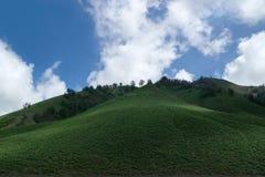 Savana verde del campo con le colline degli alberi e un cielo blu nel supporto vicino Bromo di pomeriggio Fotografie Stock Libere da Diritti
