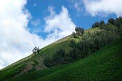 Savana verde del campo con le colline degli alberi e un cielo blu nel supporto vicino Bromo di pomeriggio Fotografia Stock