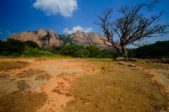 Savandugra hill in the dry season. Savandurga hill with a leafless jacaranda tree in the foreground royalty free stock image
