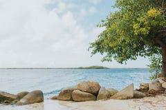 Savaneta tropical de la isla de la playa de Aruba Imágenes de archivo libres de regalías