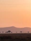 savanna photographie stock