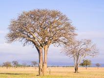 savanna photographie stock libre de droits