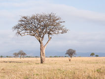 savanna image libre de droits