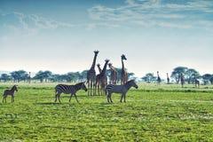 savanna images libres de droits