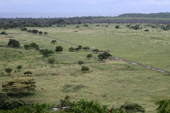 savanna photo libre de droits