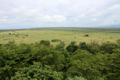 savanna photos stock