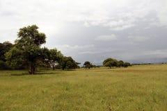 savanna photo stock