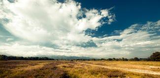 savanna photos libres de droits