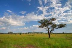 Savanna in Africa Royalty Free Stock Photos