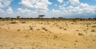 Savanna africana Immagine Stock Libera da Diritti