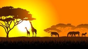 Savanna africana un paesaggio di sera illustrazione vettoriale
