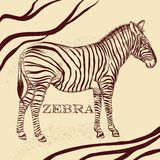 Savanna background with zebra in sepia Royalty Free Stock Photos