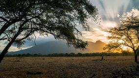 Savanna Golden Hour royalty free stock images