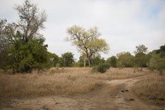 The savanna in Gorongosa National Park Royalty Free Stock Photos
