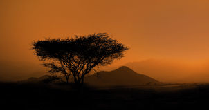 Savanna landscape Royalty Free Stock Image