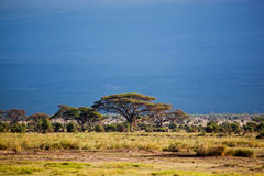 Savanna landscape in Africa, Amboseli, Kenya Stock Photos