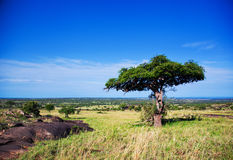 Savanna landscape in Africa, Serengeti, Tanzania Royalty Free Stock Photo