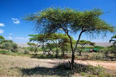 Savanna landscape in Africa, Serengeti, Tanzania Royalty Free Stock Photos