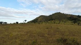 Savanna landscape in kenya. Green savanna landscape in kenya after rainy season stock footage