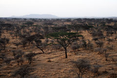 Savanna landscape Royalty Free Stock Images