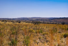 Savanna Lanscape. Small shrubs form the main type of vegetation in this flat, arid landscape Royalty Free Stock Photo