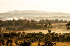 Savanna meadow and pine forest Royalty Free Stock Image